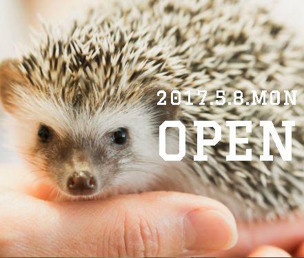 金沢にオープンしたハリネズミがいるカフェ